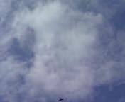 白い雲.JPG
